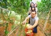 Kinh nghiệm du lịch Đà Lạt cùng với tour nhà vườn hấp dẫn
