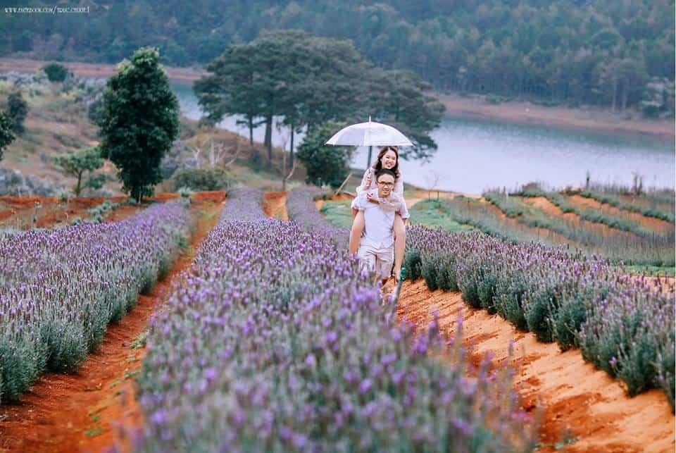 Vườn hoa lavender Đà Lạt ở gần Hồ Tuyền Lâm
